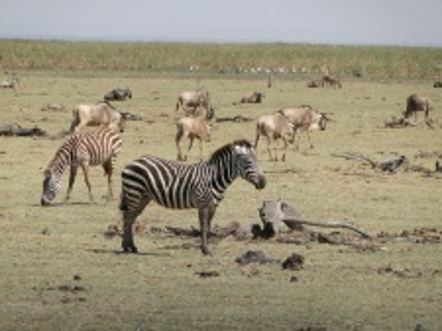 Tanzánie - Serengeti