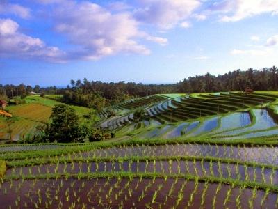 Indonésie a Bali - Bali
