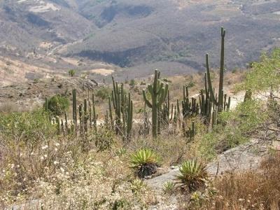 Územím předků Mayů, Chipasů a Aztéků