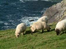 Irsko