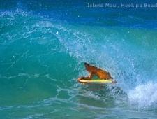USA - Havajské ostrovy